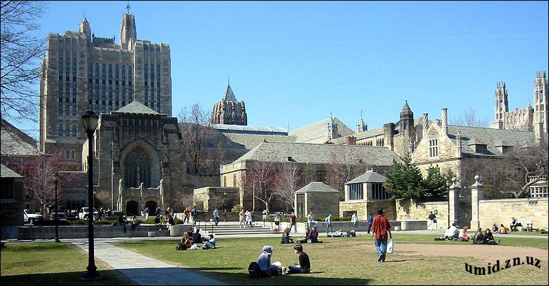 Йел университети